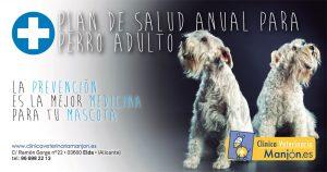 Plan de Salud Perro Adulto CV Manjon