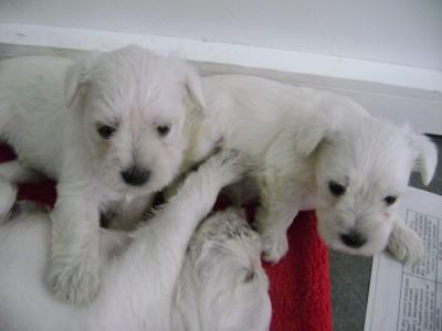 Cachorros-de-Pepo-y-Nena