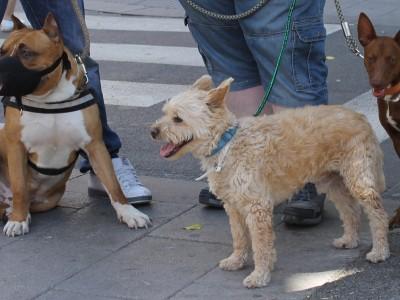 Una correcta socialización desde cachorro es esencial para una adecuada convivencia con tu perro.